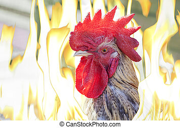 Close-up of cock head in flames, fire rooster eastern...