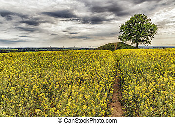 Ronneberga Backar Landscape - Ronneberga slopes is a...