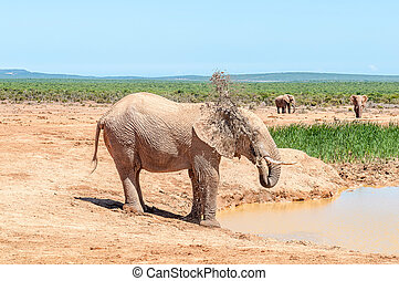 Elephant spraying it self with muddy water