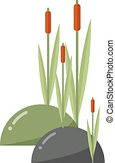 Reeds and cattail vector illustration - Reeds and cattail...