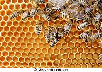some working bees in a bee hive