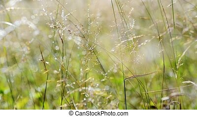 Silver morning meadow - Summer sunny scene with meadow...