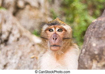 Monkey face close up. Funny monkey in green forest