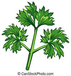 Parsley - colored illustration
