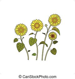 Sunflowers - Beautiful four sunflowers vector illustration...