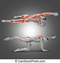 3D male figure in alternate arm/leg raise pose - 3D render...