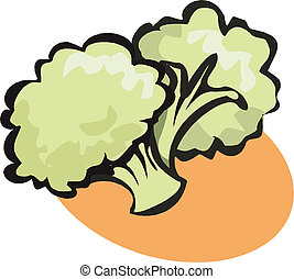 Cauliflower - Illustration of Cauliflower