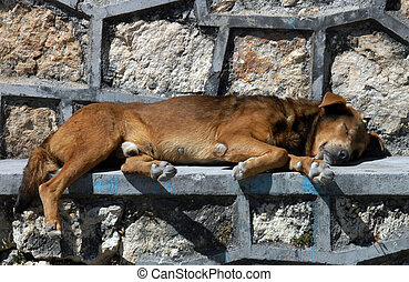 Dog sleeping on the street in San Cristobal