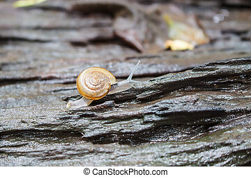snail Catch the stump,snail,beautif ul snail,snail on the...