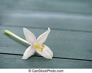 Indian cork flower on the wood floor Millingtonia hortensis...