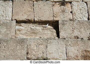 Dove on the Kotel - A dove - the bird of peace - looks out,...