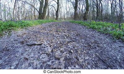 Spring forest on nature - Camera on steadicam spring forest...