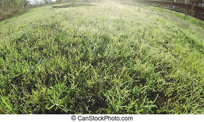 Young grass on nature