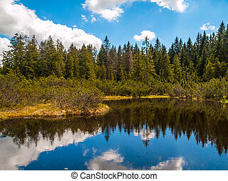 Three lake moor in Sumava National Park - Forest and blue...