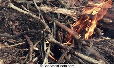 Forest Bonfire Inflaming by tree threads