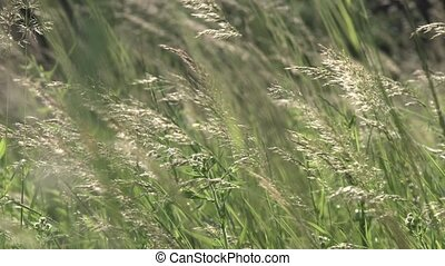 Forest High Grass on Wind