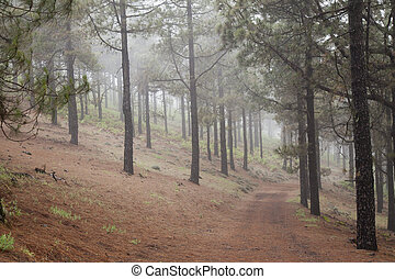 Inland Gran Canaria, foggy day in Las Cumbres, the highest...