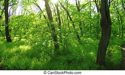 Spring forest on nature
