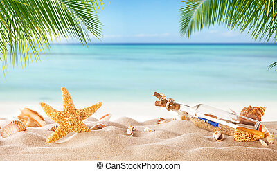 Tropical beach with various shells in sand - Tropical beach...