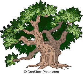 Big oak tree - Vector illustration of big and old oak tree