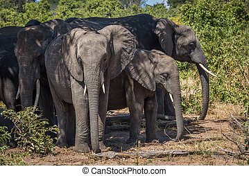 Herd of elephants standing together in shade