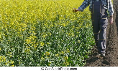 Farmer in rapeseed field - Agronomist or farmer examine...