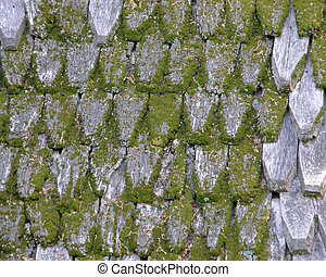 Old wooden roof covered with a moss. texture