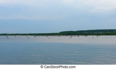 race sprint distance athletes men kayak during competition...