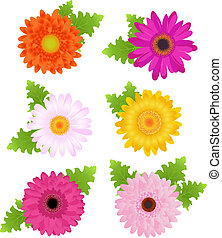 6 Colorful Daisies With Leaves, Isolated On White