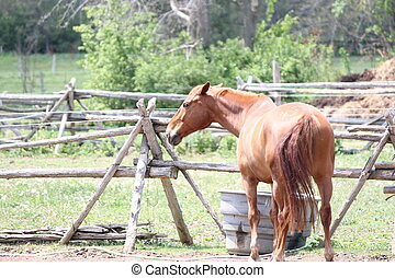 Horse in Corral - Brown colored horse in a small enclosed...