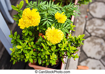 Spring or summer background with beautiful yellow flowers