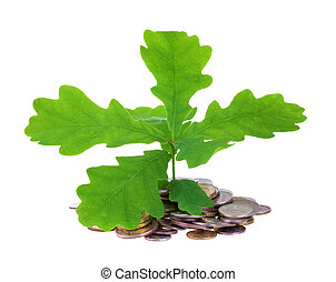 Concept of a young oak-tree and coins isolated on white...