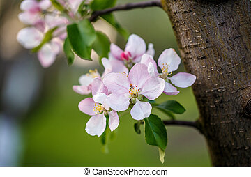 flower tree apple