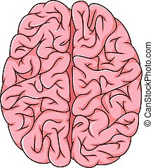 human left and right brain cartoon