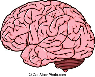 human brain cartoon - vector illustration of human brain...