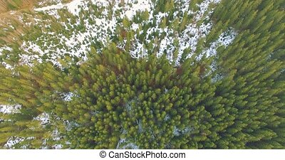 Aerial View of Pinetrees - 4k Flyover aerial footage of...