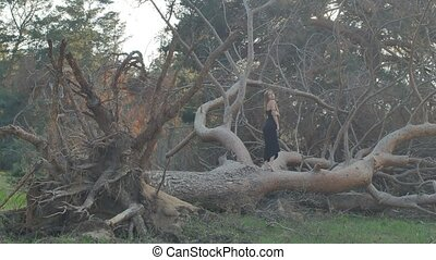 girl walking on the felled pine tree in the evening - blonde...