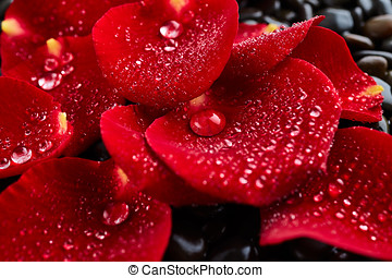 Rose petals on stones background - Red rose petals on stones...
