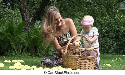 Cute baby helps his young smiling mother picking windfall apples fruits to basket in garden. 4K