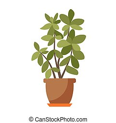 Indoor plant isolated. - House plant isolated. Vector flat...