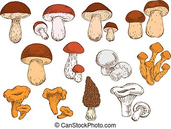 Fresh picked forest edible mushrooms sketches - Vegetarian...