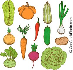 Healthy fresh harvested vegetables sketch icons - Healthy...