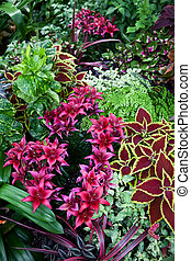 red coleus and flower