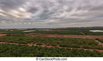 Aerial view time lapse of orange tree field - Top view of...