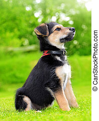 Cute puppy crossbreed dog in grass.