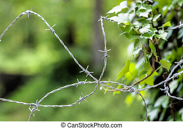 barbed wire and nature opposites - a barbed wire for leaves...