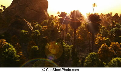 Vibrant colors palm trees summertime sunset. aerial