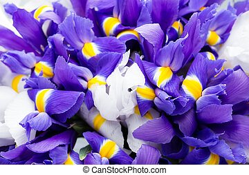 Iris flowers background, spring floral patern