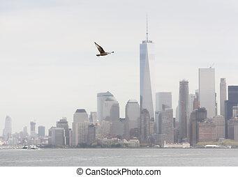 sirály, repülés, háttér,  Manhattan, ellen