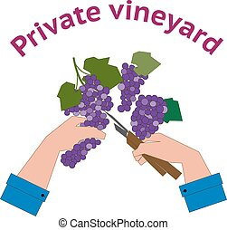 Vineyard logo in flat style